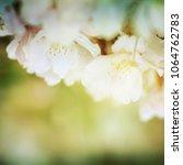 spring flowers. sakura | Shutterstock . vector #1064762783