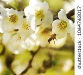 spring flowers. sakura | Shutterstock . vector #1064763017