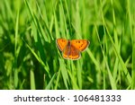 Small Orange Butterfly On Fres...