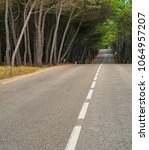road in the forest | Shutterstock . vector #1064957207