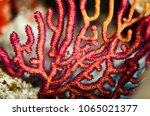 Small photo of Colorful pattern of orange and yellow branching coral, Acropora florida