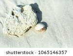 a hermit crab is emerging from... | Shutterstock . vector #1065146357