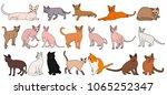 cat on white background  set | Shutterstock .eps vector #1065252347
