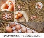 set of photos with chicken... | Shutterstock . vector #1065332693