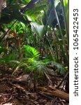 a tropical green rainforest on... | Shutterstock . vector #1065422453