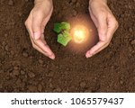 hand of person holding light...   Shutterstock . vector #1065579437