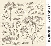 collection of zira  cumin ... | Shutterstock .eps vector #1065724157