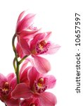 close-up of dark pink orchid against white background - stock photo