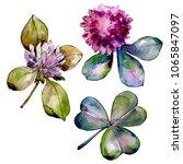 wildflower clover. floral...   Shutterstock . vector #1065847097