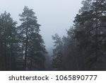 pine and fir trees on a misty ... | Shutterstock . vector #1065890777