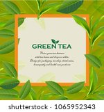 green tea leaves manu and... | Shutterstock .eps vector #1065952343