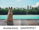 light brown dog is waiting for... | Shutterstock . vector #1065959927