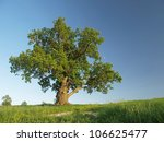 the big lonely oak  tree on a... | Shutterstock . vector #106625477