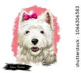 cairn terrier dog breed...   Shutterstock . vector #1066306583