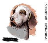burgos pointer dog breed...   Shutterstock . vector #1066306877