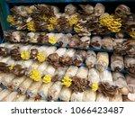 various species of mushrooms...   Shutterstock . vector #1066423487