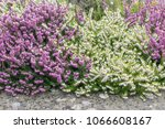 old concrete border with...   Shutterstock . vector #1066608167