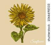 sunflower. color card.... | Shutterstock .eps vector #1066698533