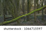 Bare Trees  One Fallen  In A...