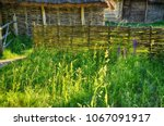 Small photo of Wicker wooden sheds and an old fence among the greenery, among the foreskin and thin flowers in the sunlight. Nobody
