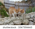 two little white with yellow... | Shutterstock . vector #1067306663