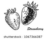 strawberry engraved sketch | Shutterstock .eps vector #1067366387