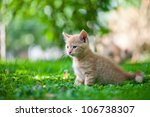 Stock photo little kitten in the garden 106738307