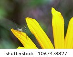 Macrophotography Of A Tiny...