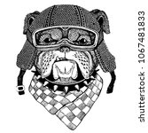bulldog  dog with motorcycle...   Shutterstock .eps vector #1067481833