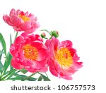 Peony Flowers Bouquet over white background - stock photo