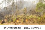fire forest in summer  natural... | Shutterstock . vector #1067729987