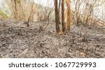 fire forest in summer  natural... | Shutterstock . vector #1067729993