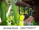 luxurious tropical plants in a... | Shutterstock . vector #1067794577