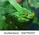 green snake | Shutterstock . vector #106792037
