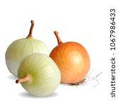 fresh  nutritious  tasty onion. ... | Shutterstock .eps vector #1067986433