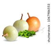 fresh  nutritious  tasty onion. ... | Shutterstock .eps vector #1067986553