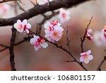 sakura cherry blossom at... | Shutterstock . vector #106801157