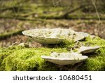 Fungus In The Forest
