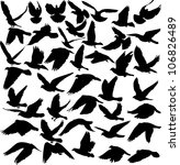 set of pigeon silhouettes - vector illustration - stock vector