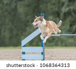 Small photo of Smooth Collie jumps over an agility hurdle in agility competition