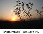 grass and sun  evening sky. | Shutterstock . vector #1068395447