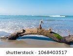 fallen tree limb with green... | Shutterstock . vector #1068403517
