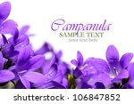 Campanula flower border - stock photo