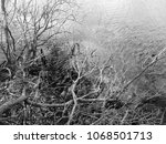a black and white photo of dead ... | Shutterstock . vector #1068501713