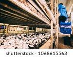 mushrooms portobello and... | Shutterstock . vector #1068615563