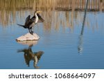 Cormorant Drying Its Feathers...