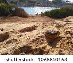 Turtle Shell On A Rocky Beach