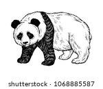 panda bear engraving raster...   Shutterstock . vector #1068885587