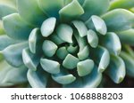 Succulent Plant Of Green Color...