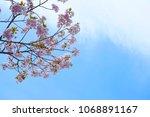 cherry blossom branch cloud... | Shutterstock . vector #1068891167